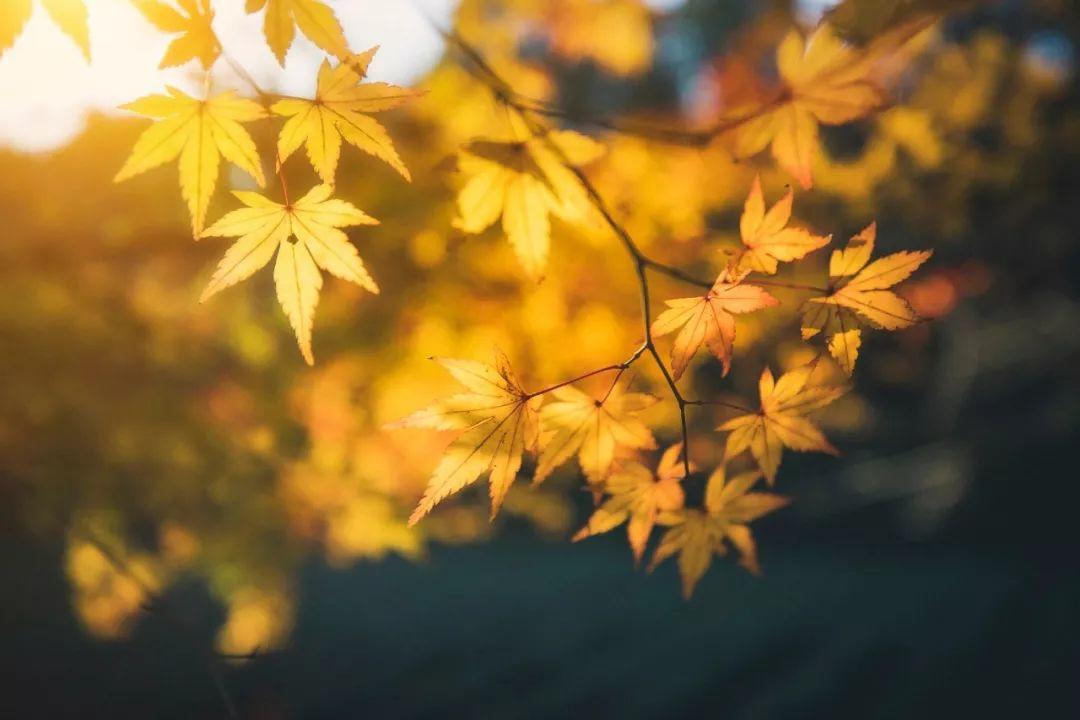 关于秋天的古诗.jpg
